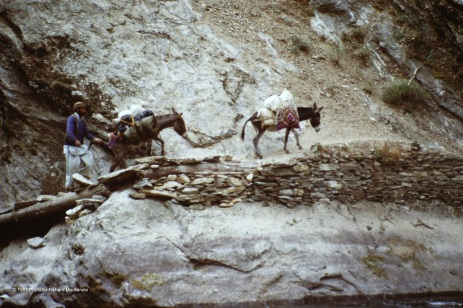 The further we went, our donkeys proved only Rahman Baig could keep them moving.