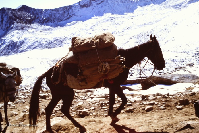 Our fellow travelers on the trail carried vital loads for the mujahideen.